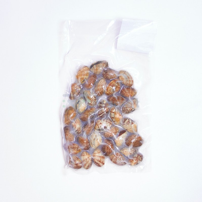 Морской петушок Вонголе, Сахалин, 500 гр
